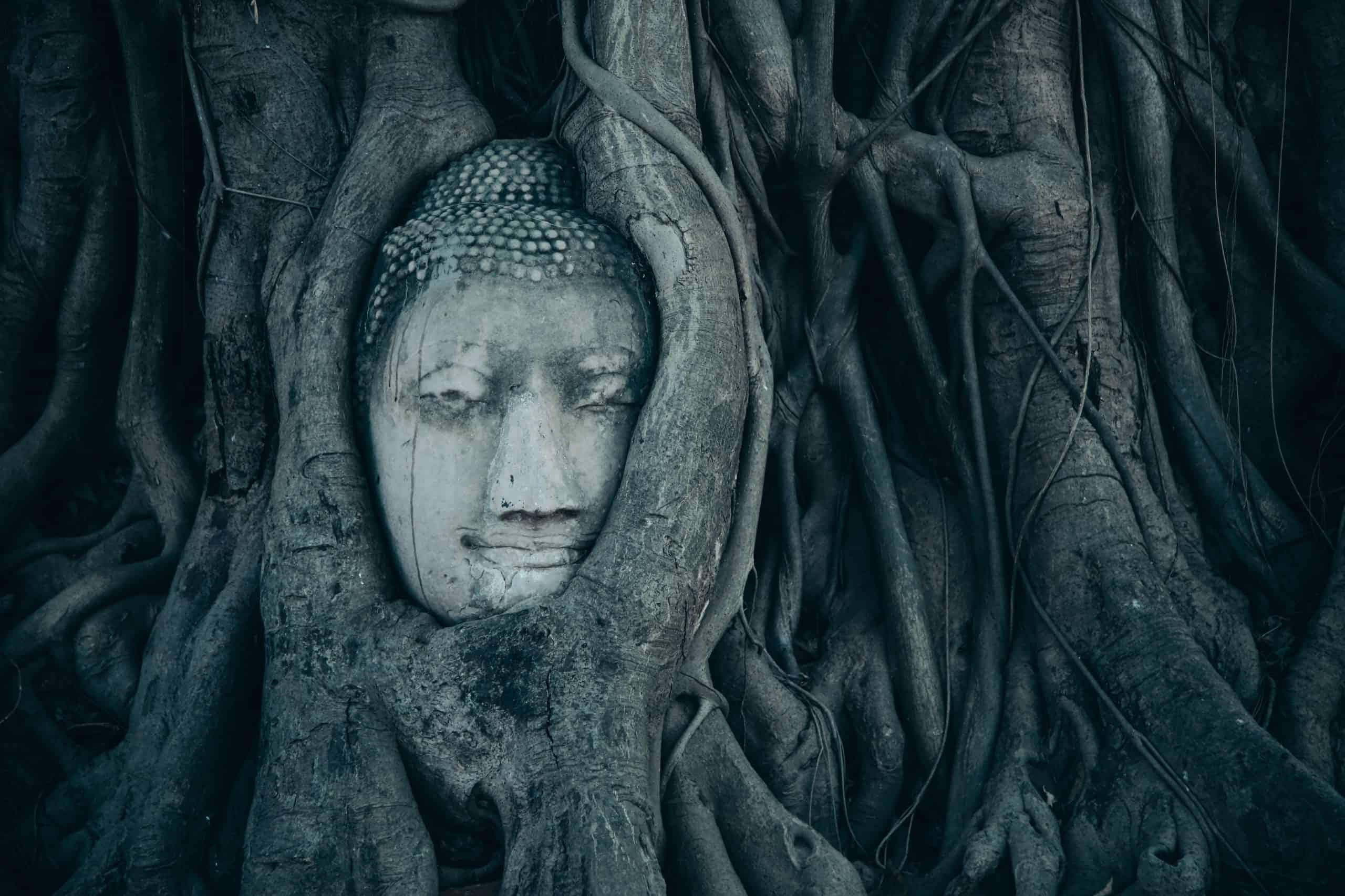 Some Famous Buddha Quotes To Make Yourself The Buddhism Character